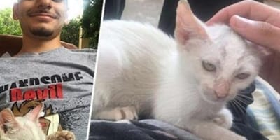 tiny kitten discovered by man when she was sleeping on his stomach