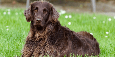 Your dog is vomiting blood? Here's why