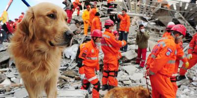 Leichenspürhund sucht nach Erdbeben