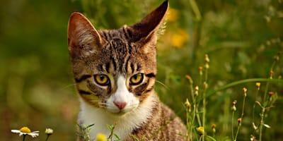 Katze lauscht in Wiese