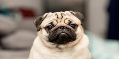 7 olores que todos los perros odian