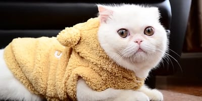 Top 9 cats with flat faces