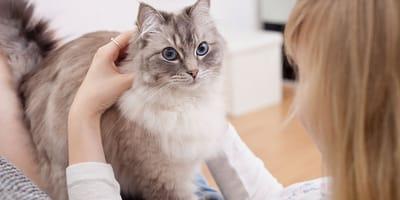 Si tu gato te hace estas 8 cosas significa que te ama mucho