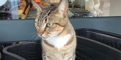 Kotka Minnie w koszyku