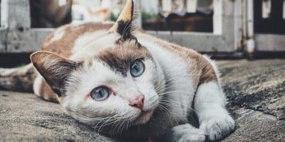 Ojos de los gatos: ¿qué quiere decir su mirada?