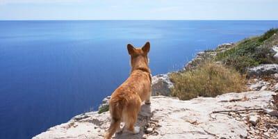 Hund schaut aufs Meer in Kroatien