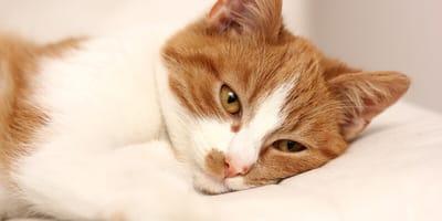 Katze wirkt krank und müde