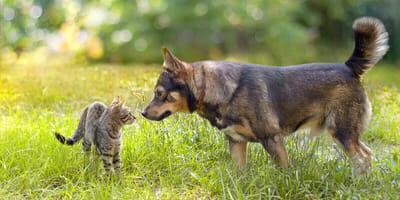 Hund und Katze, eine ganz besondere Beziehung