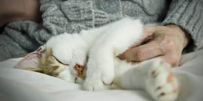 Gripe en gatos