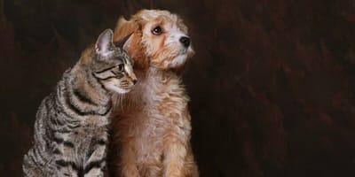 Traurige Katze und Hund
