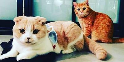 los gatos de Ed Sheeran
