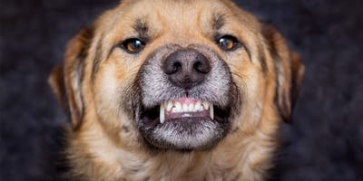 Seguros para perros PPP