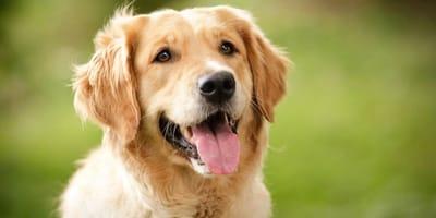 Hacerle acupuntura al perro: técnica y ventajas