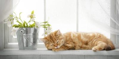 Red is beautiful: Diese Katzen sind rote Schönheiten