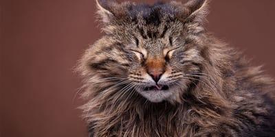 Olores molestos para gatos