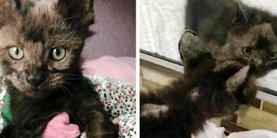 Kai, the rescued kitten grows back her fur coat