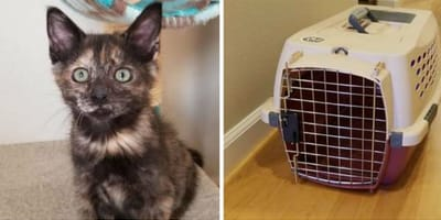 Katze und Katzentransportbox