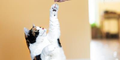 Cat expert: clicker training