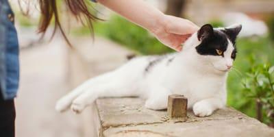 Kot nie miauczy – czy to normalne?