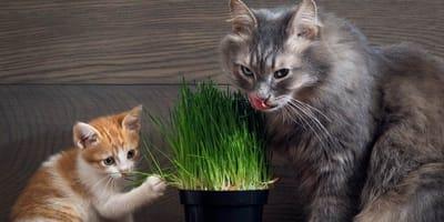 Plantas tóxicas para gato
