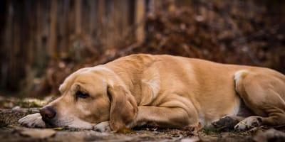 Naukowcy potwierdzają, utrata psa jest równie bolesna, co utrata bliskiej osoby!