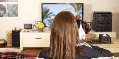 pies ogląda telewizję