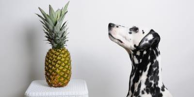 ananas und Dalmatiner