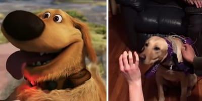 Wizja gadającego psa z animacji Odlot coraz bardziej realna? Nietuzinkowy eksperyment studentów z Illinois!