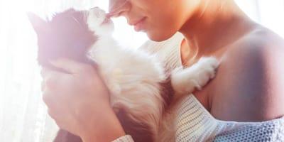 ¿Cuáles son las razas de gatos que no dan alergia?