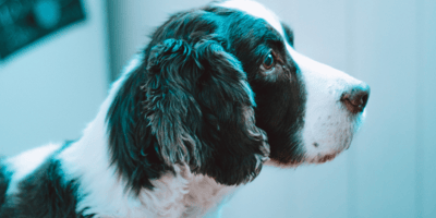 Black dog poop: What can poop tell about your dog's health