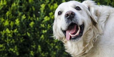 Jak dbać o zęby psa, aby były piękne i zdrowe?