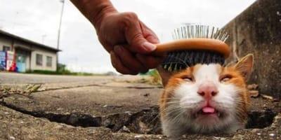 Hilarious photos of stray cats