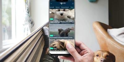 Squid App mit Hund im Hintergrund