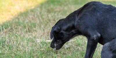 Il cane vomita sangue: cosa devo fare?