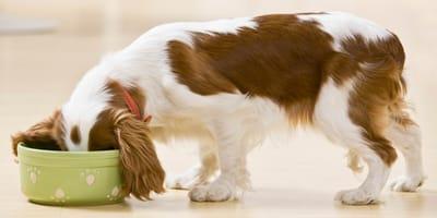 Białko  - niezbędny składnik w diecie Twojego psa!