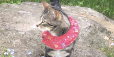 the birdbesafe collar is backed up by scientific research