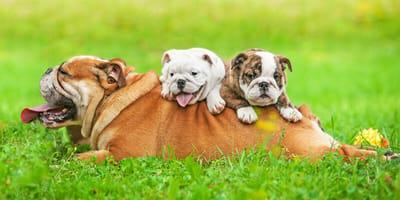 I 9 papà cani e gatti (ma non solo) più belli di Instagram