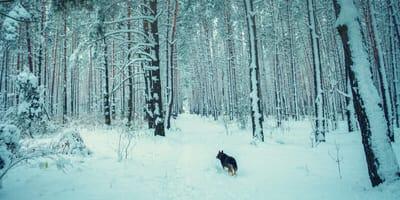 Schneesturm:  Mann kuschelt sich an seinen Hund. Dann passiert ein Wunder!