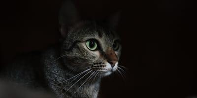 Geniale Tipps, wenn die Katze nachts keine Ruhe geben will