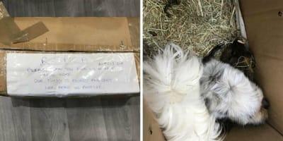caja de cartón abandonada conejillos indias