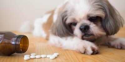 Für den tierischen Mineralstoffhaushalt: Schüssler Salze für Hunde