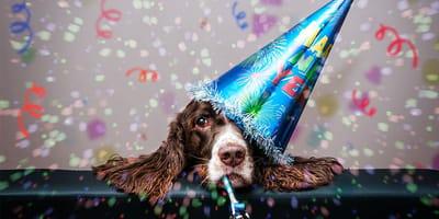 4 recetas de pastel para perros para celebrar su cumpleaños