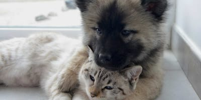cane e gatto teneri