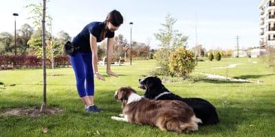 Hundetrainerin mit zwei Hunden