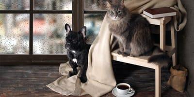 10 najpiękniejszych wierszy o psach i kotach