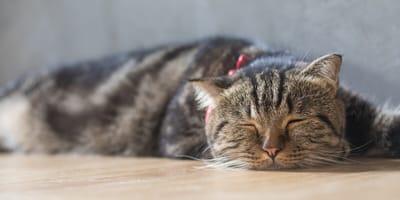 Krank und müde wirkende Katze