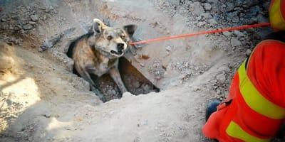 perro atrapado tuberia valencia