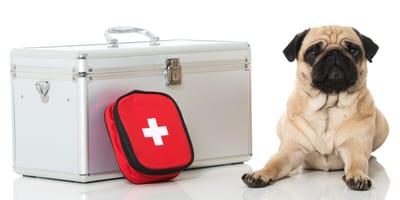 Hund mit erste Hilfe Kit