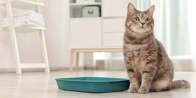 Cat expert: litter training