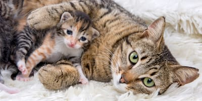W jaki sposób kotka opiekuje się kociętami?